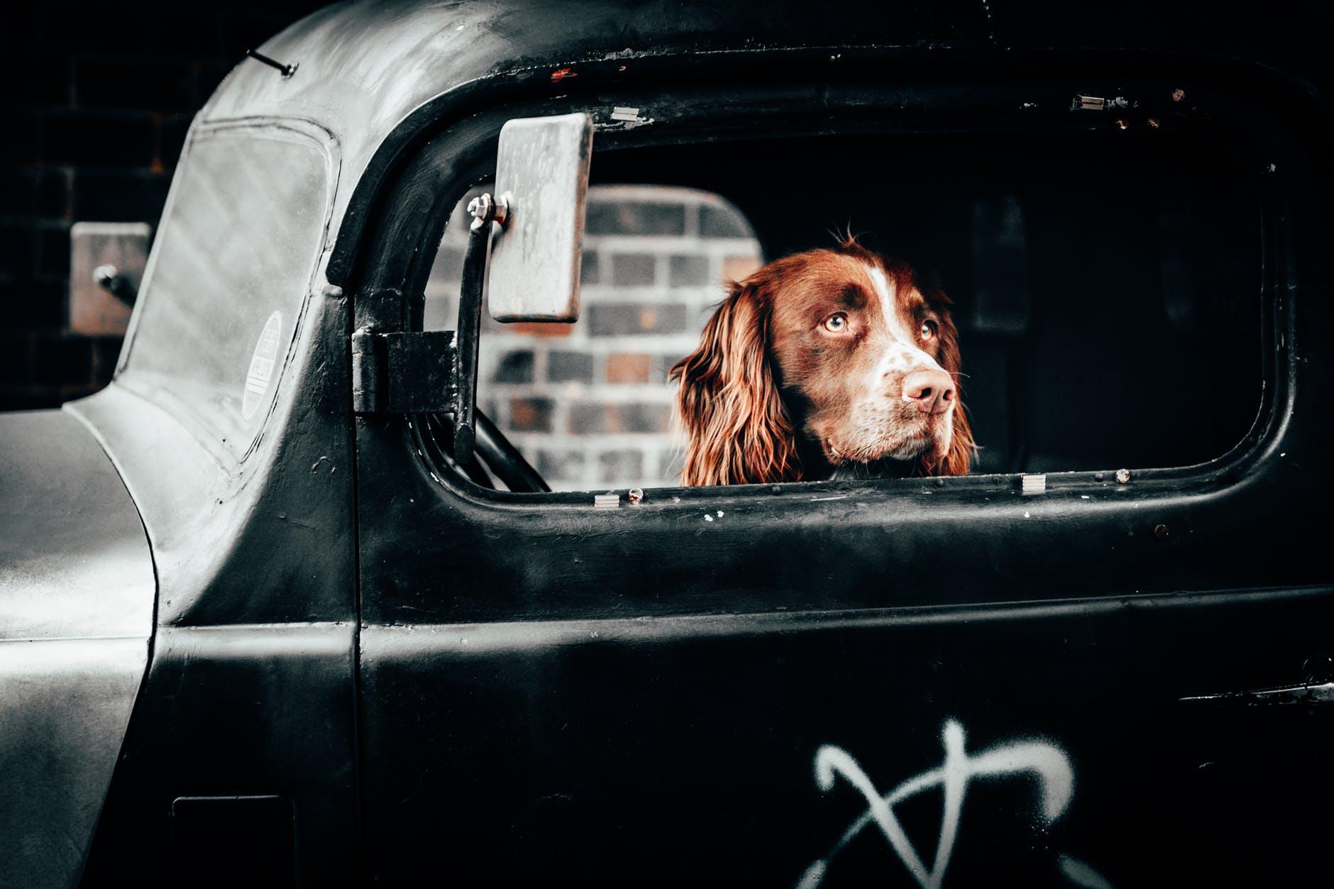 dog inside vehicle