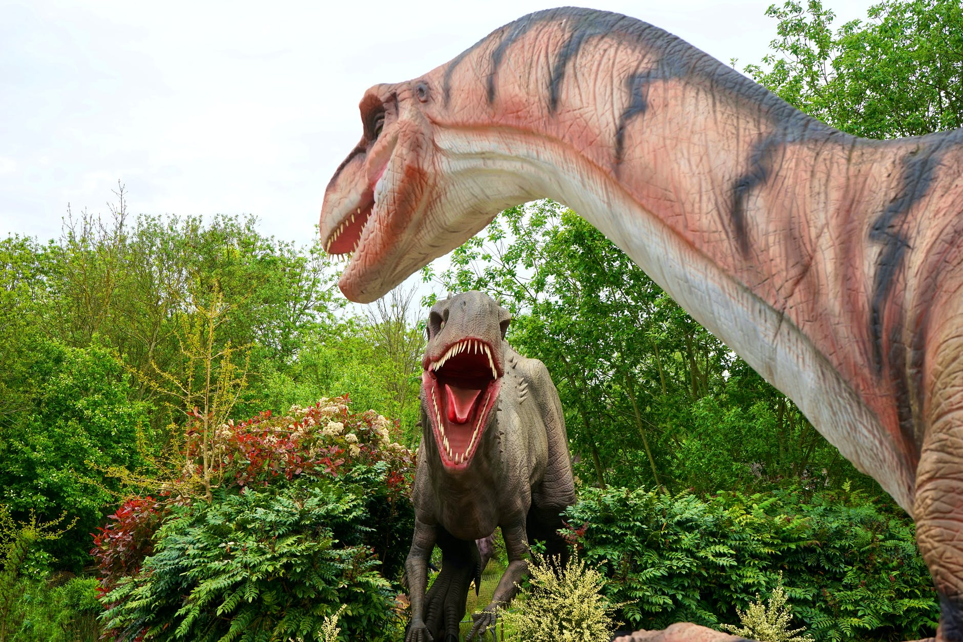 animal beast carnivore creature